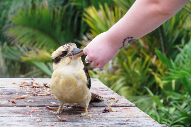 """When I asked my daughter Emma to feed Larry for me, so as I could take a photo of him being hand fed, Larry was a tad reluctant. """"Who's this?"""", he seemed to be asking!"""