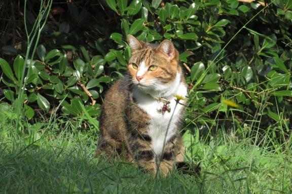 Miss Tibbs so enjoys her time in the garden.