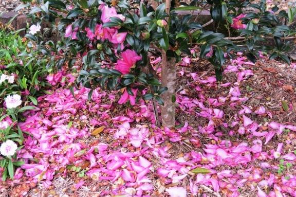 Pink carpet.