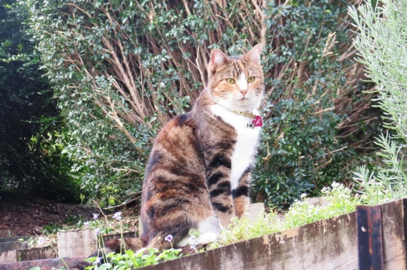 The overseer of all things garden related.