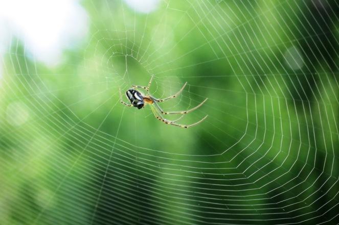 Incy-Wincy spider.