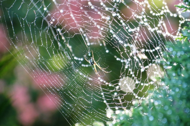 Web of pearls.
