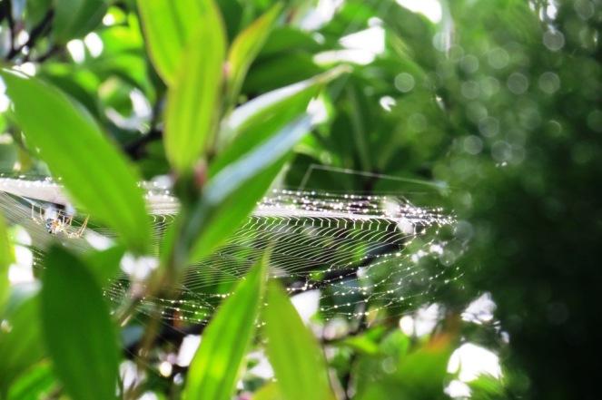 Diamond edged spider's trampoline.