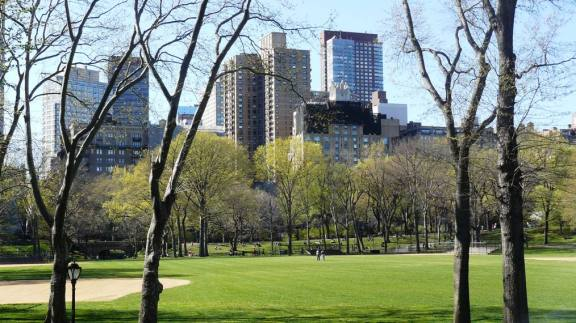Central Park against the buildings of New York.