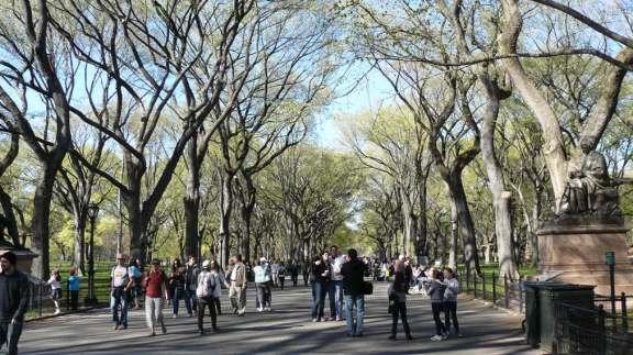 Spring in Central Park.