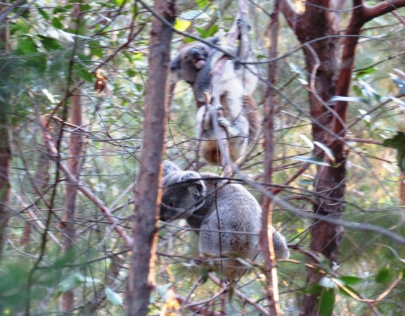 They move surprisingly fast when they climb the trees.