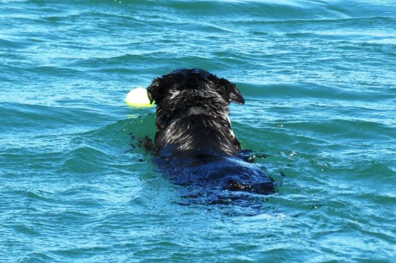 No Bella, it's MY ball!