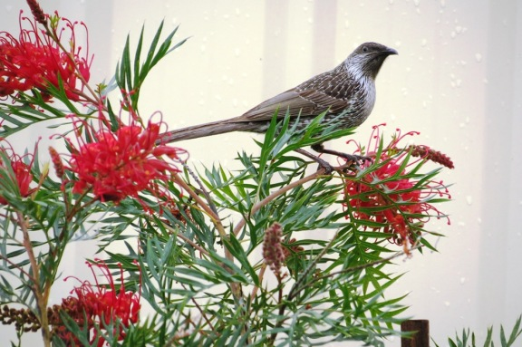 A very pretty bird, one which I don't see at my place.