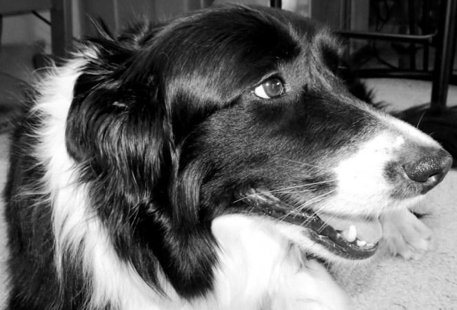 Sweet Grand-Puppy, Bella.