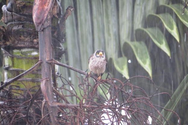 Little Forlorn Bird.