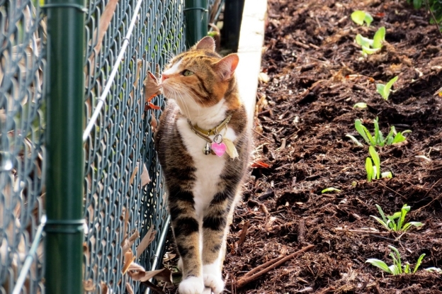 Isn't Miss Tibbs clever? Planted those seedling herself.... ;)
