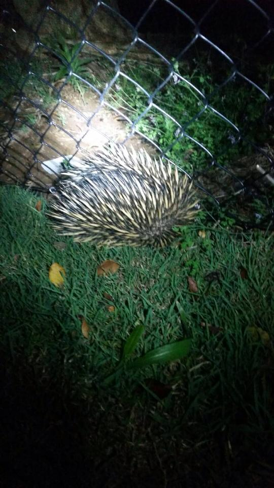 Forrest's new friend, the Echidna.